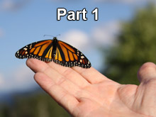 The Monarch Butterfly and You