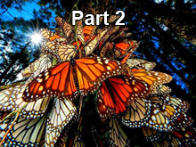 Monarch Butterfly and You - Part 2